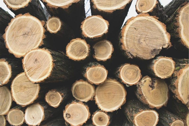 Canada and the United States Argue Over Lumber and NAFTA